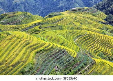 The beautiful and ancient terraced rice fields of Longshen