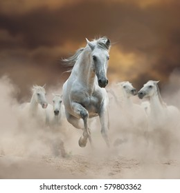 Beautiful andalusian stallion with herd, running in the dusty desert in sunset
