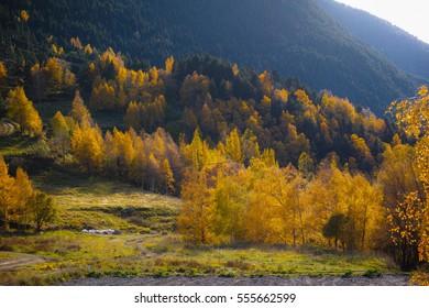 Beautiful Andorra's vegetation on an autumn day
