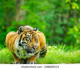 beautiful animals from around the world