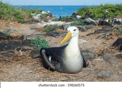 Beautiful animals on the Galapagos Islands