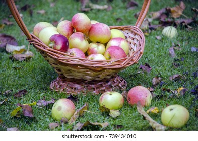Beautiful apples in a basket on the grass