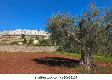 Beautiful Apulia, Locorotondo view from an olive tree, Italy