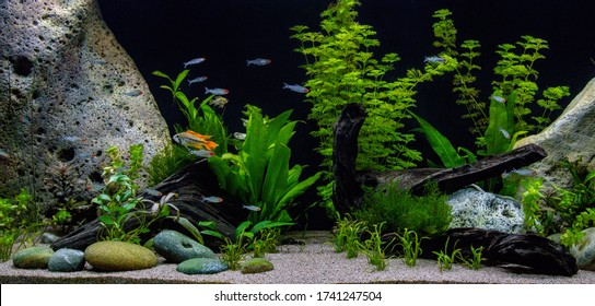 Beautiful aquarium. Juwel aquarium. 450 liters planted freshwater aquarium.