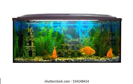 Beautiful aquarium on a white background