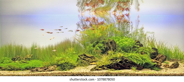 Aquatic Plants Images, Stock Photos & Vectors | Shutterstock