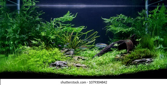 Fish Tank Background Images Stock Photos Vectors
