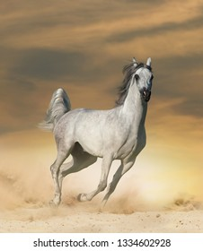 Beautiful arabian horse in desert running wild