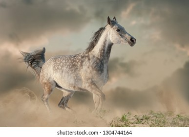 Beautiful arabian horse in the dust running on the wild