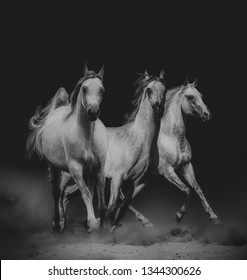 Beautiful arabian horses in dark running wild
