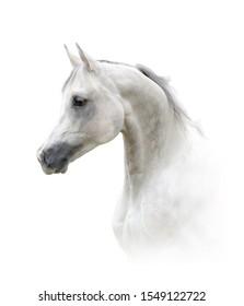 Beautiful arabian stallion, portrait in high key. Snow white horse. White horse headshot. White horse on white background. Isolated animal