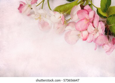 Beautiful Art stylized Card with pink Apple flowers. Amazing Spring floral background. Horizontal image With Copy Space. Top view, Flat lay.