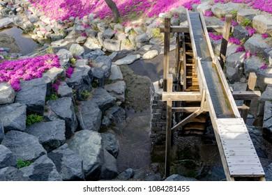 Beautiful artificial mill stream or water wheel decorated in shiba sakura botanical garden at Hwangmaesan County Park in Hapcheon-gun, Gyeongsangnam-do, South Korea.