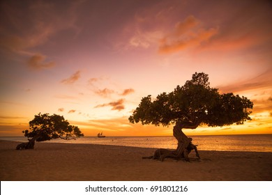 Beautiful Aruba sunset with divi divi trees and sailboat in the distance.