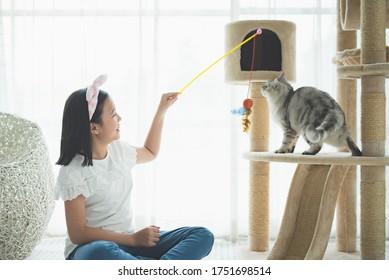Schönes asiatisches Mädchen, das mit einer amerikanischen kurzhaarigen Katze im Wohnzimmer spielt