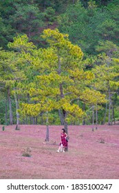 A beautiful Asian woman in red dress standing in pine forest on the beautiful pink grass. Nature and tourism.