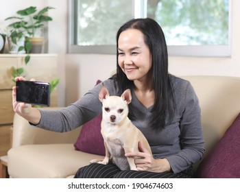 Beautiful Asian woman sitting on sofa in living room taking selfie photo with her Chihuahua dog on her lap. dog lover,  work from home , social distancing concept.