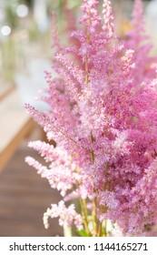 Beautiful astilba flowers in the botanical garden
