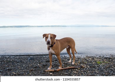 Beautiful Athletic Mixed Breed Dog Playing by Water