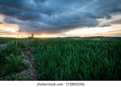 Beautiful atmospheric sunset over a green grain wheat field and above it threatening storm clouds sunset colours