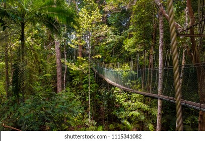 A beautiful atmospheric view of the dense rainforest and the suspension bridge which is part of the world's longest canopy walkway in Taman Negara National Park, Malaysia.