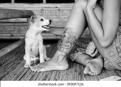beautiful attractive girl with a tattoo on his leg a little puppy kisses on the nose