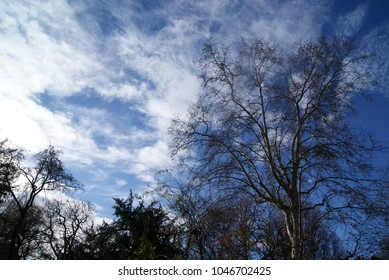 Beautiful atumn winter sky with trees and plants