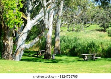 Beautiful Australian bush setting picnic area, taken in South Australia.