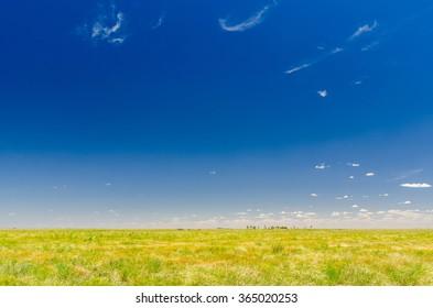 Beautiful Australian meadow