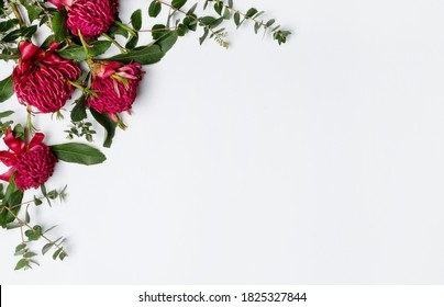 Beautiful Australian native red waratah flowers and eucalyptus leaves, creating a floral border on a rustic white background. Space for copy.