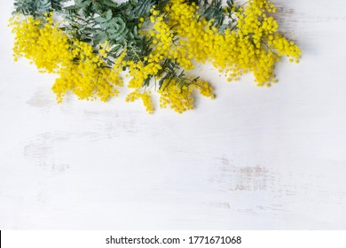 Beautiful Australian native yellow wattle or acacia flowers, frame the composition space from above, on a white rustic background. Know as Acacia baileyana or Cootamundra wattle. Space for copy.