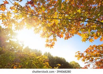 Beautiful autum background green and red foliage againt the blue sky
