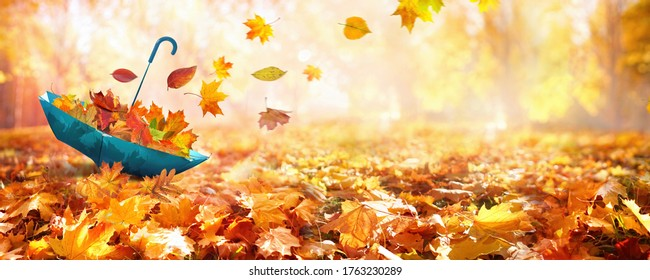 Beautiful autumn background landscape. Carpet of fallen orange autumn leaves in park and blue umbrella. Leaves fly in wind in sunlight. Concept of Golden autumn. - Shutterstock ID 1763230289