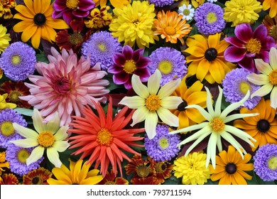 Beautiful autumn background of various garden flowers for congratulation or greeting cards. Floral texture, top view.