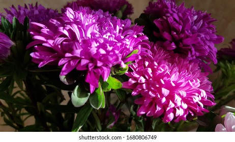 Beautiful autumn bouquet of purple pink flowers in bright sunlight. Texture of luxuriant petals of aster flowers closeup. Floral backdrop with copy space.