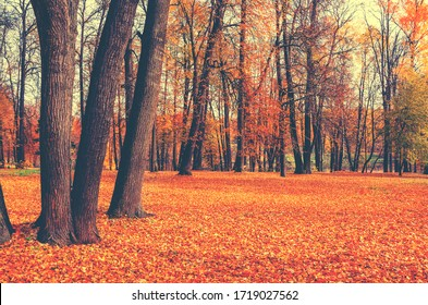 Beautiful autumn calm nature landscape.Sunny autumn scene with land covered by orange and red leaves in empty park.Concept of beauty of autumn nature.Vintage colours. - Shutterstock ID 1719027562