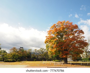 The beautiful autumn color leaves of maple tree with blue sky background