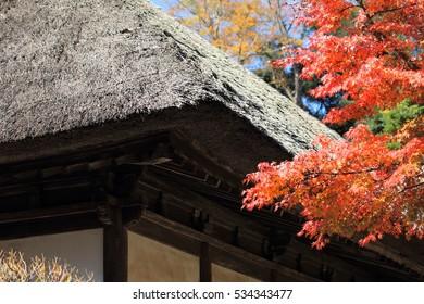 beautiful autumn colorful leaves
