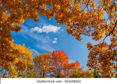 Beautiful Autumn Colorful Trees And Blue Sky View 2
