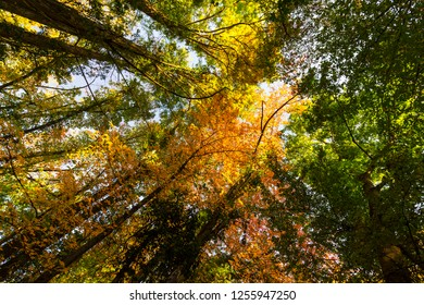 Beautiful autumn colors on a sunny day in the forest