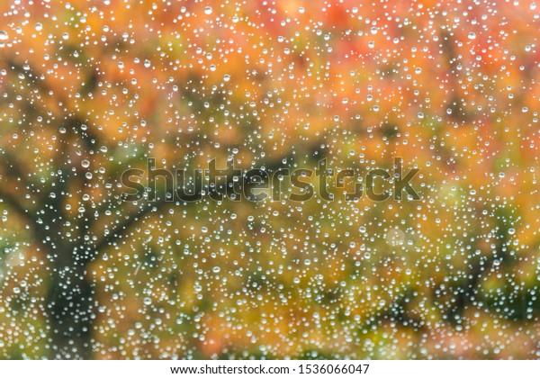 Beautiful Autumn Colors in the Rain through Raindrops on a Window