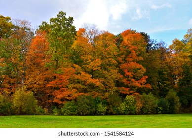 Beautiful autumn colors at the tree line in a forested park area in Wisconsin in October showing a range of colors from yellow oranges reds and green ranges.
