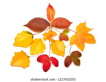 Beautiful autumn composition with leaves of maple, strawberry, hornbeam and birch isolated on white background. Falling foliage. Flat lay, top view, creative concept