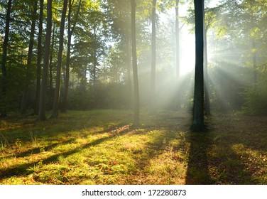 Beautiful autumn dawn in beech forest