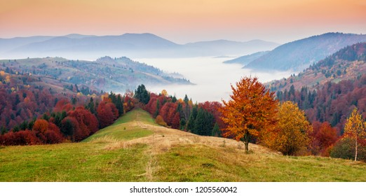 Beautiful autumn dawn scenery in the mountains with meadow and colorful trees on foreground and fog underfoot. National Natural Park Synevyr, Carpathian Mountains, Ukraine.