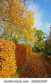 A beautiful Autumn day in a Cotswold Country Lane near to Painswick, The Cotswolds, Gloucestershire, United Kingdom