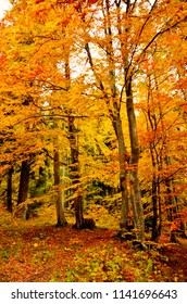 Beautiful autumn fall forest scene with vibrant colors