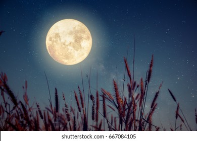 Beautiful autumn fantasy - wild flower in fall season and full moon with milky way star in night skies background. Retro style artwork with vintage color tone