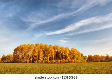 Beautiful autumn field