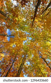 Beautiful autumn foliage along the Escarpment Trail of Porcupine Mountains Wilderness State Park in Michigan